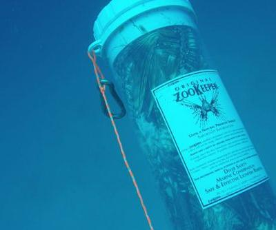 Florida's Answer to Invasive Lionfish? If You Can't Beat 'Em, Eat 'Em