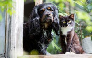 How To Determine If A Dog Is Cat-Friendly