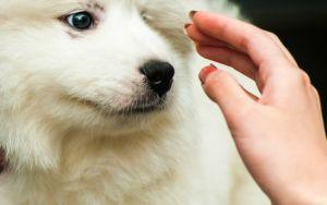 How To Help Your Dog Be More Comfortable With Body Handling