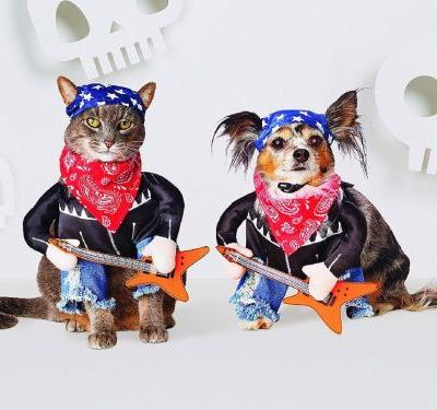 30 pet costumes for Halloween that are so cute your heart might melt
