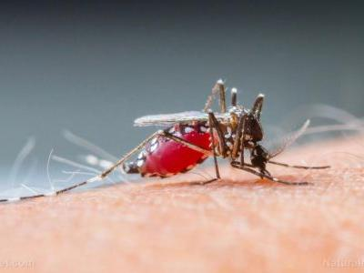 New study reveals that the malaria parasite can infect you as deep as your bone marrow