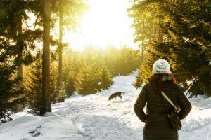 8 Dog Breeds That Make Great Hiking Buddies