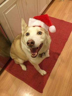 11 Dogs Whose Christmas Day Plans Are Just Like Yours