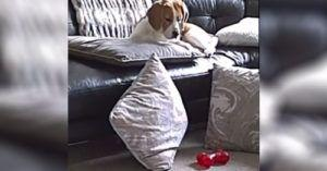 Devastated Pooch Mourns The Sudden Loss of Her Chew Toy