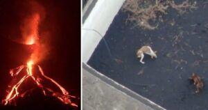 Incredible Footage Shows Rescuers Drone-Dropping Food To Dogs Trapped By Lava