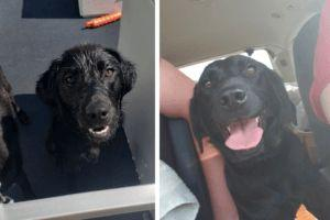You Helped Rehabilitate A Frightened, Abandoned Lab