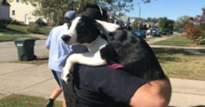 Sassy Puppy Saved After Firing Up a Stove While Stealing A Snack