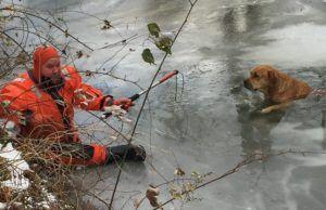 Firefighters Rescue A Missing Dog Trapped In The Ice Of A Frigid Creek