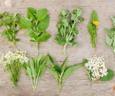 5 Healing Herbs You Can Find in the Wild This Spring