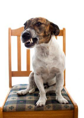 Why Does My Dog Growl?