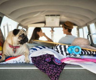 5 adventurous pets of Instagram who will inspire you to travel