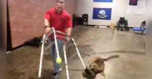 Enthusiastic Dog Hysterically Fails His Service Dog Training Test