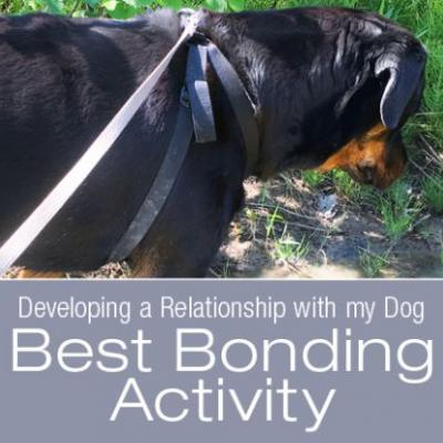 The Best Investment in the Relationship with Your Dog is Time. and Frogs?