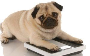 7 Vet-Recommended Tips To Help Your Dog Lose Weight