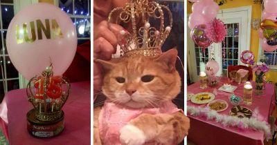 Loving family celebrate their cat's 15th birthday with an amazing quinceañera