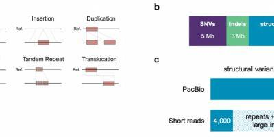 Stanford Scientists Report First Use of PacBio Whole Genome Sequencing to Identify a Disease-Causing Mutation
