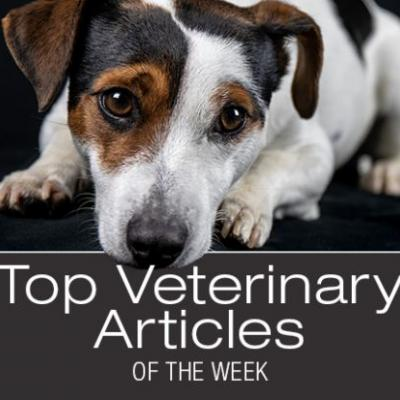 Top Veterinary Articles of the Week: Elevated Liver Enzymes, Collapsed Trachea, and more