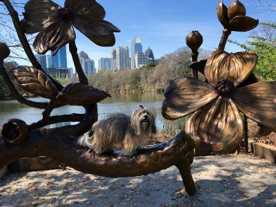 Dogwood Sculpture with Fido + Fluffy's FreebieFriday