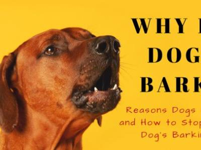 Why Do Dogs Bark? Reasons Dogs Bark and How to Stop Your Dog's Barking