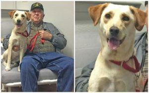 """This Deserving Veteran Was Paired With His """"Best Buddy,"""" Thanks To Your Support!"""