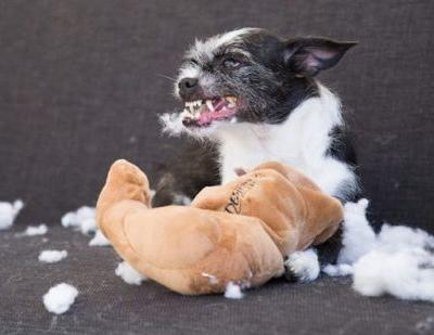 What Are Dog Toys Stuffed With?