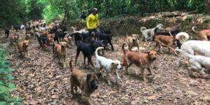 Couple Provides A Forever Home For Over 1,000 Dogs