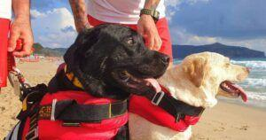 Young Girl Is Saved From The Strong Ocean Current By Canine Lifeguards