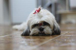 Top 3 Dog Health Issues Supplements Can Help With
