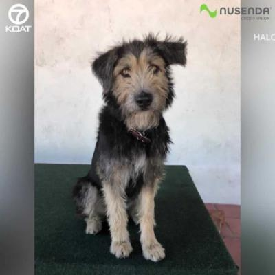 From the shelter to Disney, terrier-mix makes it to the big screen