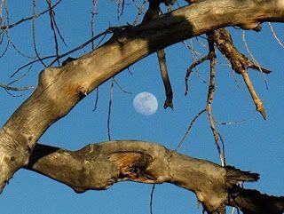 "Landscape Fine Art Photography, Trees, Moon ""Peeking Through"" by International Photographer Kit Hedman"