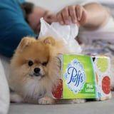 A Man Dressed His Pomeranian Up as a Box of Tissues For Halloween, and It's Brilliant