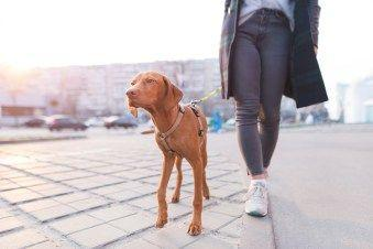 Your Guide to Hip Dysplasia in Dogs