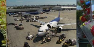LATAM Cargo transports over 9,000 tons of flowers for Valentine's Day