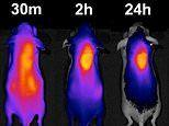 'Homing beacon' guides chemotherapy drugs straight to the tumour
