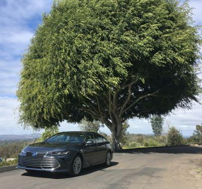 On the Road With the 2019 Toyota Avalon