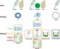 Microscale disruption of microorganisms for parallelized process development