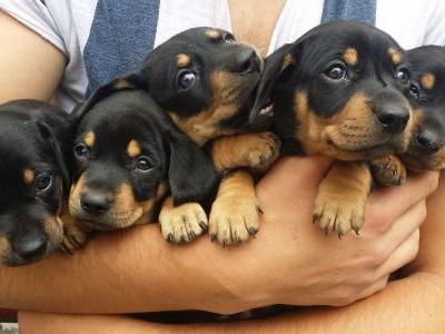 This 'pupternship' will pay you $100 per hour to pet puppies