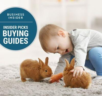 The best rabbit toys you can buy