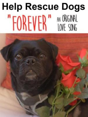 New Forever Giveaway, Forever Lyrics and Rescue Dog Donations