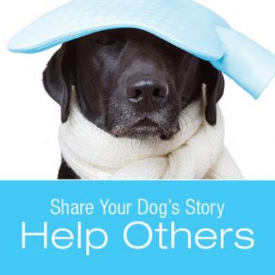 """Share Your Story for a Chance to Win a Free Copy of """"Symptoms to Watch for in Your Dog"""""""