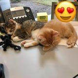There's an Office in Ohio With 2 Kitten Employees, and Hi, Yes, Are You Hiring?