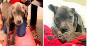After Unthinkable Neglect This Injured, Sick Dog Was Saved By A Good Samaritan