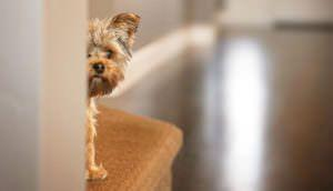 7 Natural Ingredients To Help Your Dog's Fireworks Anxiety