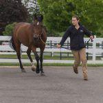 Just a Number: How to Manage Your Aging Horse for Happy, Healthy and Fit Golden Years