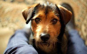 Door-To-Door Searches Could Lead To Fines For Unlicensed & Unvaccinated Pups