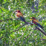 The 20 best birds of Belgrade and where to find them