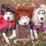 No Tricks Here! These Pups Deserve All of the Halloween Treats