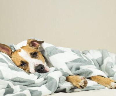 Did Your Dog Eat Human Medication? Expert Advice on What to Do