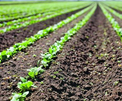 How Biotech Can Reduce Emissions Through Soil Microbes