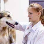A life lesson in veterinary care